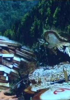 Phóng viên VTV8 bàng hoàng vì vụ phá rừng Pơ mu ở Quảng Nam