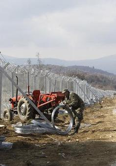 Bộ tứ Visegrad gửi quân đến Đông Âu