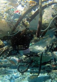 Rác thải đại dương sẽ nhiều hơn cá vào năm 2050