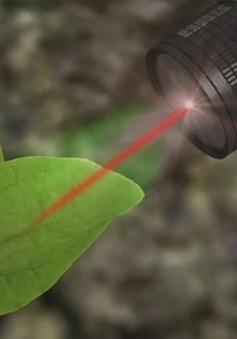 Công nghệ chế biến rau củ thành dụng cụ dò bom mìn
