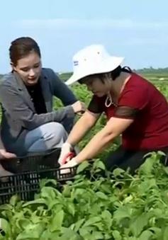 """""""Thở phào"""" kết quả thử nhanh mẫu rau sạch ngay tại ruộng"""