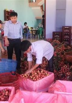 DN liên kết chặt chẽ với nông dân, thúc đẩy xuất khẩu vải thiều