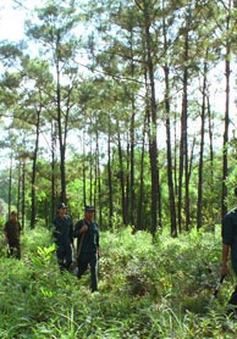 Sửa đổi, bổ sung Luật Bảo vệ và phát triển rừng