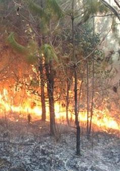 Cà Mau: Vụ cháy vùng than bùn vẫn chưa được dập tắt
