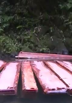 Lần theo dấu vết lâm tặc tàn phá rừng phòng hộ tại Thừa Thiên - Huế