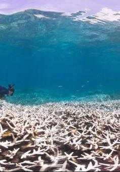 Báo động tình trạng san hô tại Australia bị tẩy trắng