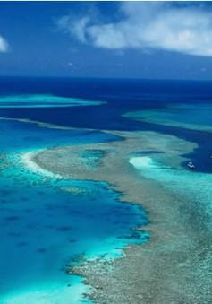 """Rạn san hô Great Barrier Reef """"kêu cứu"""""""