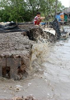 Cà Mau: Đê biển Tây sạt lở nghiêm trọng
