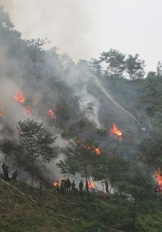 Diện tích rừng bị cháy gấp 2,5 lần cùng kỳ năm 2015