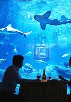 Choáng với cuộc thi ngủ cùng... cá mập