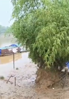 Sông Ngàn Phố (Hà Tĩnh) sạt lở nghiêm trọng