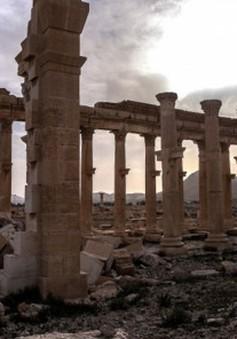 Công tác tái thiết thành cổ Palmyra tại Syria