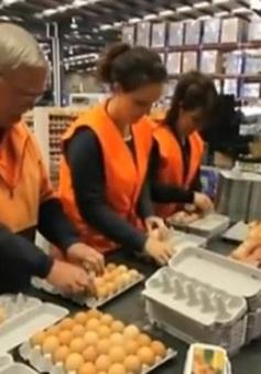 Thực phẩm quá đát vẫn được bán tại Đan Mạch
