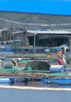 Có hành vi đóng dấu kiểm định khống tại VP Tổng cục Thủy sản