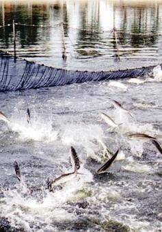 Xử lý nghiêm vụ cấp chứng nhận trái phép thức ăn thủy sản