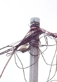 Xây nhà không đúng quy hoạch, người dân Đồng Nai khổ vì điện yếu