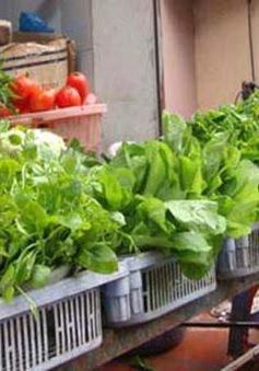 40/120 mẫu rau tồn dư thuốc bảo vệ thực vật vượt mức