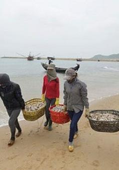 Đẩy mạnh chuyển đổi sinh kế cho người dân miền Trung sau sự cố môi trường