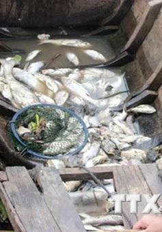 Bà Rịa - Vũng Tàu: Cá chết hàng loạt trên sông Chà Và