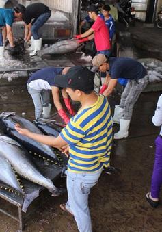 Hơn 80% tàu khai thác cá ngừ đại dương thua lỗ