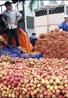 Ninh Bình xuất khẩu 4.000 tấn vải thiều tươi