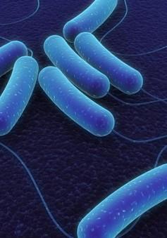 Dụng cụ phát hiện nhanh vi khuẩn E.coli trong nước