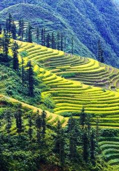 Việt Nam trong Top điểm đến được yêu thích nhất thế giới
