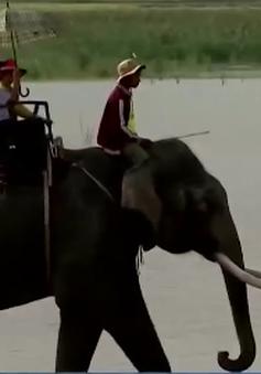 Những con voi còn lại cuối cùng ở Tây Nguyên