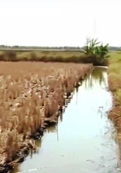 """Không quy hoạch tốt, vựa lúa ĐBSCL có thể """"bốc hơi"""""""