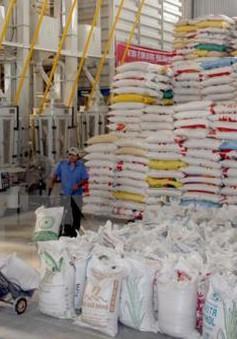 Xuất khẩu gạo khó đạt kế hoạch năm 2016