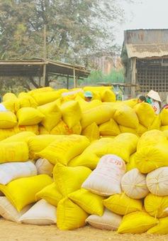 Giảm chỉ tiêu xuất khẩu gạo còn 5,65 triệu tấn