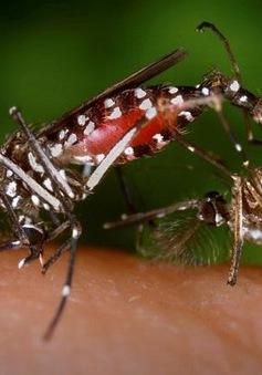 Chồng thai phụ nhiễm virus Zika ở Bình Dương có triệu chứng tương tự
