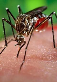 """""""80% người nhiễm virus Zika không có triệu chứng"""""""