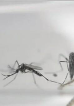Mỹ cảnh báo dịch Zika bùng phát vào dịp Hè
