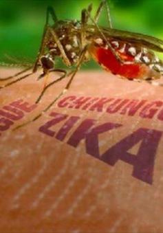 Nỗi ám ảnh virus Zika lan rộng trên toàn thế giới