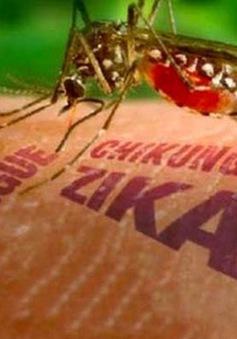 Phòng chống Zika: Bộ Y tế chưa hạn chế đi lại