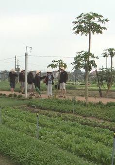 Trải nghiệm trồng rau tại làng rau Trà Quế, Hội An