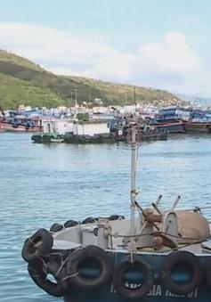 """Đánh bắt hải sản có trách nhiệm - """"tối hậu thư"""" cần thực hiện"""