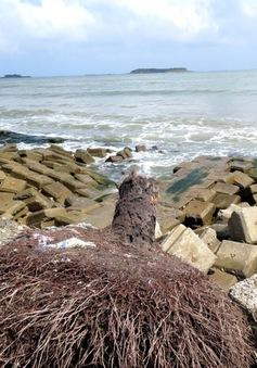 21,5 tỷ đồng xây kè chống sạt lở ở biển Tam Hải, Quảng Nam