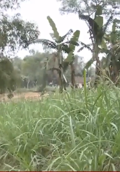 Quảng Nam: Nguy cơ mất làng do sạt lở