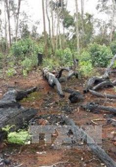 Đắk Nông: Kiến nghị điều tra, làm rõ việc hơn 53 ha rừng ở xã Quảng Sơn bị phá
