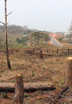 Thừa Thiên - Huế: Phá rừng tự nhiên để chiếm đất sản xuất