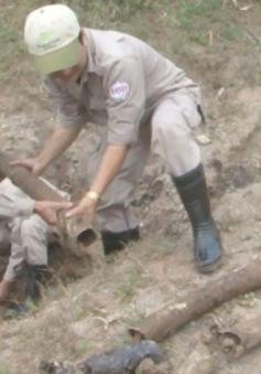 Xử lý thành công 60 quả bom bi trong vườn nhà dân