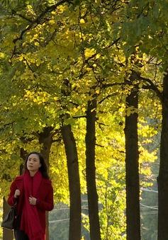 """Hậu trường """"dữ dội"""" để có Thu vàng rực rỡ nước Nga trong phim Tết """"Matxcơva – Mùa thay lá"""""""