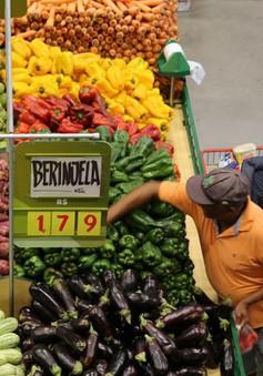 Tốc độ tăng trưởng kinh tế Brazil nhanh nhất trong 4 năm