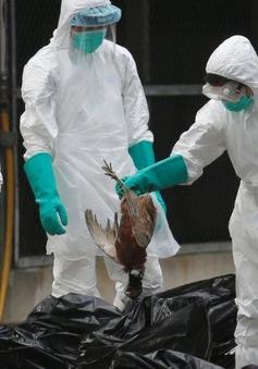 Số ca nhiễm cúm H7N9 tăng đột biến tại Trung Quốc