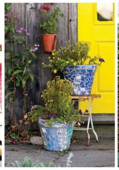 Bí kíp tô điểm những chậu cây và hoa thêm rực rỡ