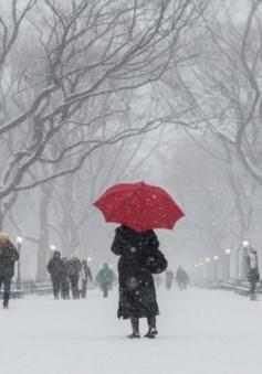 Bão tuyết hoành hành ở Bắc Mỹ, hơn 1 triệu học sinh phải nghỉ học