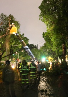 Hà Nội: Cành cây cổ thụ gãy làm 2 người bị thương sau cơn mưa