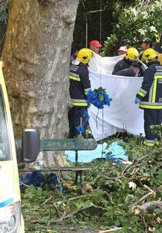Cây đổ khiến 12 người Bồ Đào Nha thiệt mạng